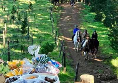 Afternoon Horse Ride and Picnic