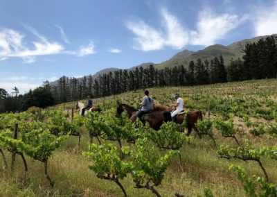 Horse Ride on the farm